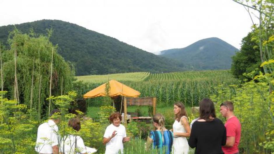Obiščite zeliščni vrt Majnika (foto: Majnika arhiv)
