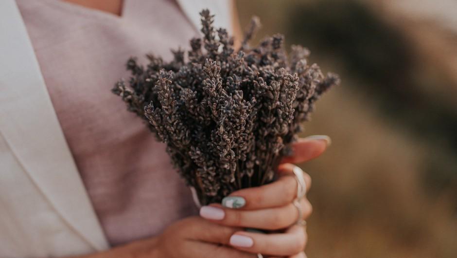 Šopek sivke privlači ljubezen in spokojnost (foto: pexels)