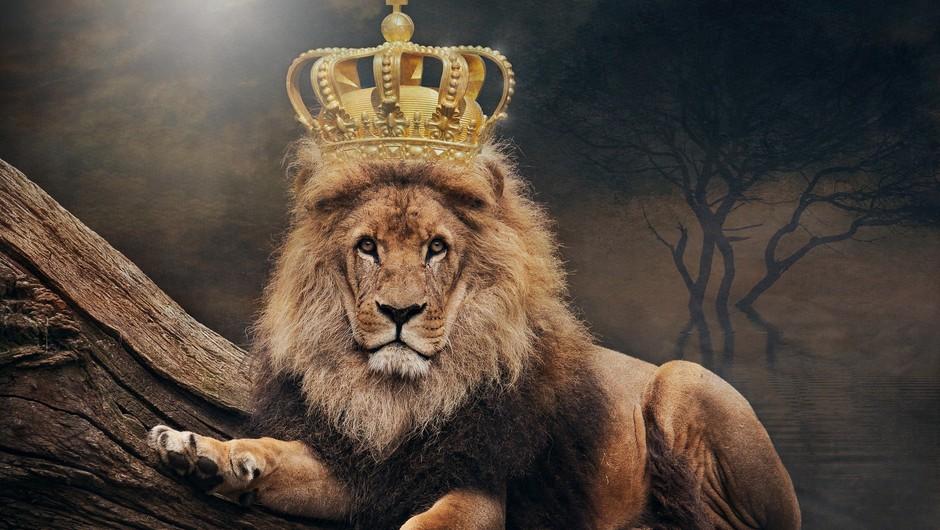 LEV - najbolj opaženo znamenje zodiaka (foto: pixabay)