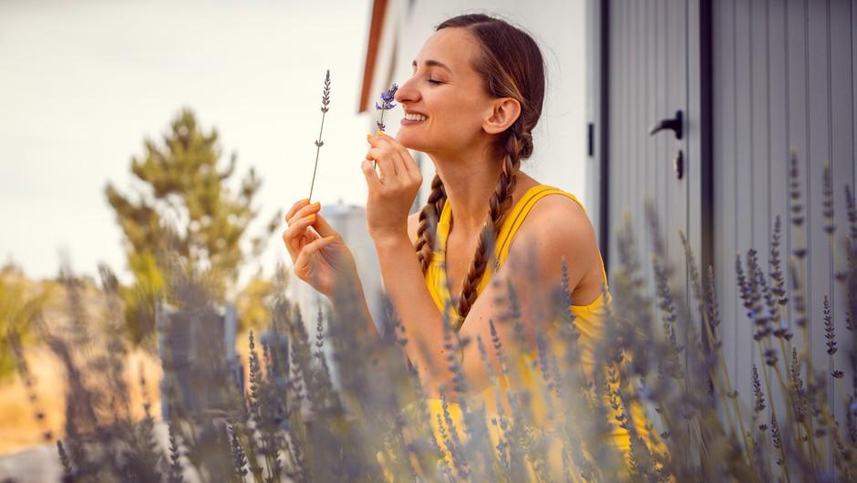 Vonj sivke z našega eteričnega telesa srka negativne energije (foto: profimedia)