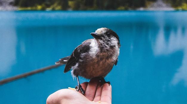 Ptice nam poskušajo prenesti duhovna sporočila (foto: pexels)