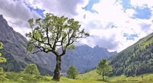 Keltski horoskop: Katero drevo ste?
