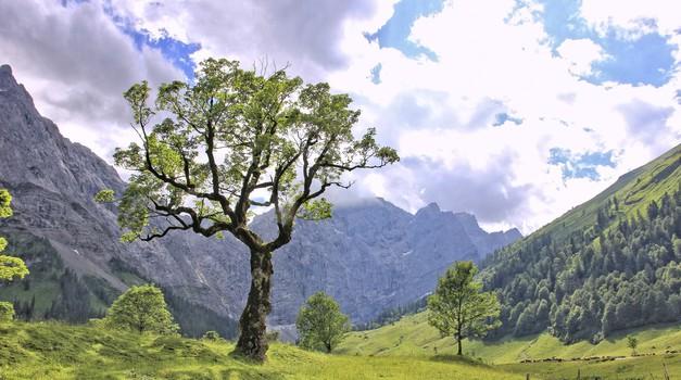 Keltski horoskop: Katero drevo ste? (foto: pixabay)