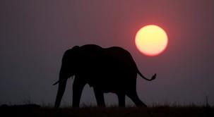 Navdihujoča zgodba o slonu, ki daje upanje (Jorge Bucay)